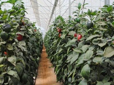 Nguyên tắc sản xuất rau sạch theo tiêu chuẩn GLOBALG.A.P